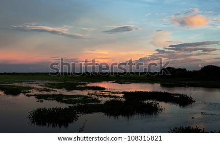 Sunset in the world of water of the El Cedral - Los Llanos, Venezuela, Latin America