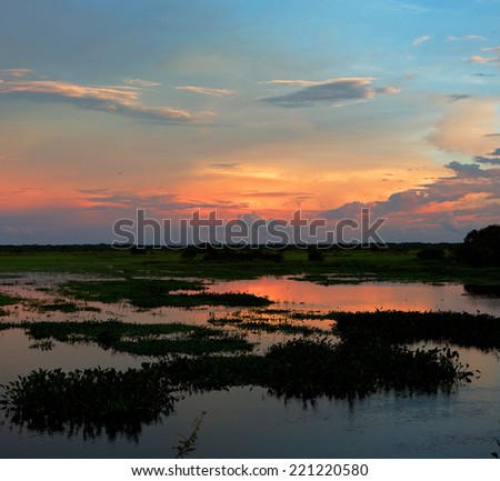 Sunset in the world of water of the El Cedral - Los Llanos, Venezuela, South America