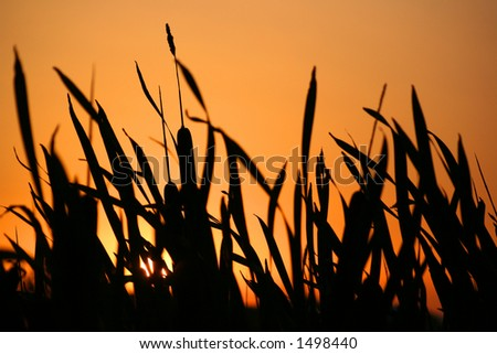 Sunset in vegetation silhouette