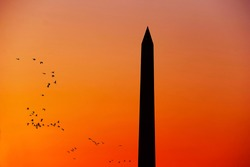 Sunset in Washington DC with Washington Monument and birds flying in orange sky background
