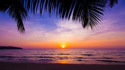 sunset landscape. beach sunset.  palm trees silhouette on sunset tropical beach