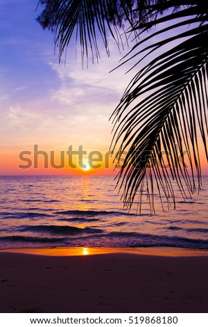 sunset landscape. beach sunset.  palm trees silhouette on sunset tropical beach #519868180