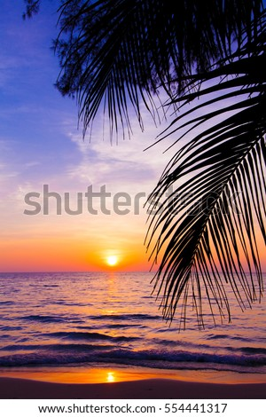 sunset landscape. beach sunset.  palm trees silhouette on sunset tropical beach #554441317