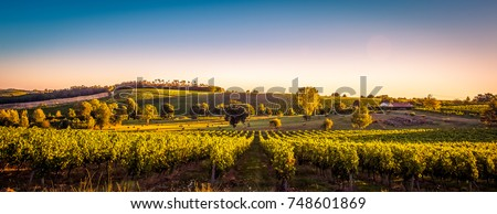 Sunset landscape bordeaux wineyard france, europe Nature