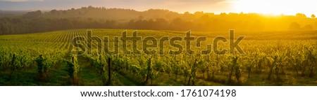 Sunset landscape, Bordeaux wineyard, Langoiran, france Сток-фото ©