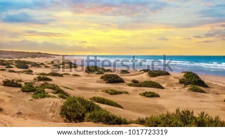Sunset landscape in Agadir, Morocco, where desert sand turns into a beach at the Atlantic Ocean.