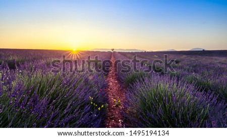 Sunset landscape over lavanda field in french provence area Foto stock ©