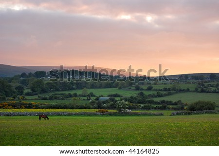 Sunset landscape with a lonely horse in foreground