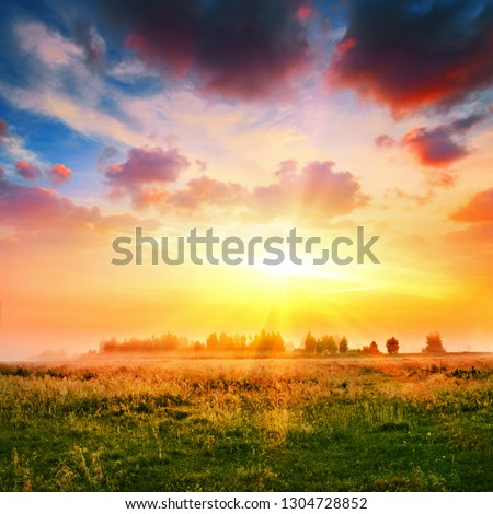 Sunset landscape with a plain wild grass field and a forest on background. #1304728852