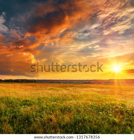 Sunset landscape with a plain wild grass field and a forest on background. #1317678356