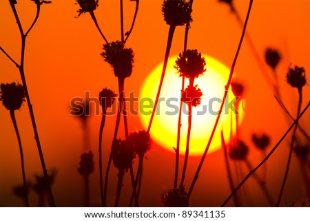 sunset landscape with sun over silhouette of dry grass