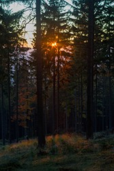 Sunset light in autumn forest