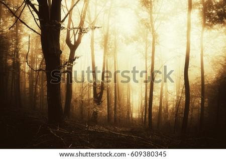 sunset light in fantasy woods scenery #609380345