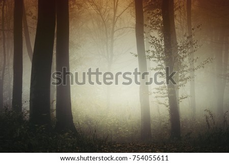 sunset light in misty forest with autumn colors #754055611