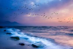Sunset nature. Flying birds. Sea nature background.