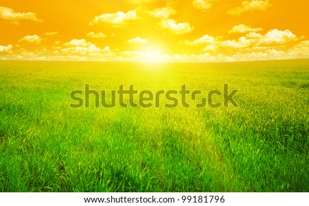 sunset on a spring field