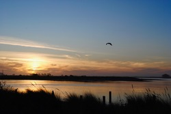 Sunset on Eureka, California's Pacific coast on Humboldt Bay. Bird flying. Humboldt Bay stretches from the sloughs and creeks at Arcata Marsh to the Humboldt Bay National Wildlife Refuge at Loleta.