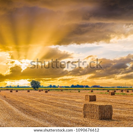 sunset on hay bales drying in Italian country fields Stock fotó ©