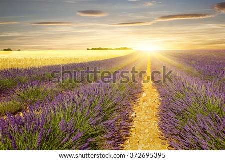 Sunset on lavender and wheat fields #372695395