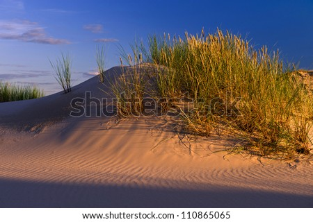 sunset on sand dunes of the desert
