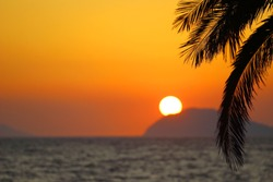 Sunset on sea, palm tree, relaxing scene
