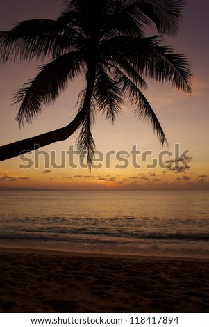 Sunset on sea, palms, and sea in evening tropic