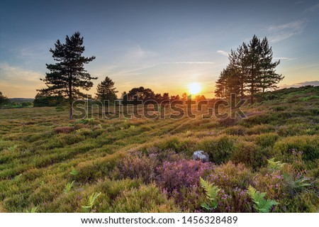 Sunset on Slepe Heath near Wareham in the Dorset countryside #1456328489