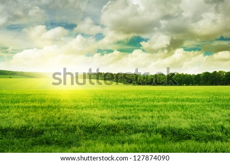 sunset on spring field
