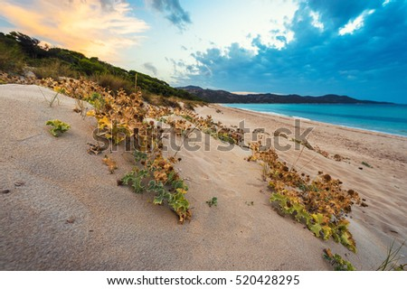 Sunset on the beach #520428295