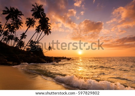 Sunset on the beach with coconut palms. Sri Lanka #597829802