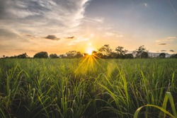 Sunset on the cane field in Siaton, Negros Oriental, Philippines