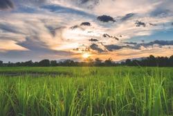 Sunset on the cane fields, Siaton, Negros Oriental, Philippines