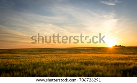 Sunset on the field - Shutterstock ID 706726291