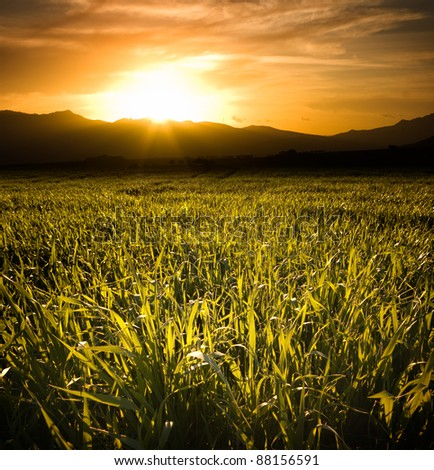 sunset on the field of cereal and hills on the horizon