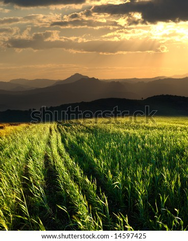 sunset on the field of grain on the horizon hills
