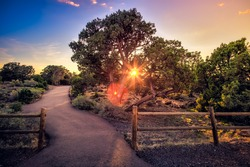 Sunset on the Forest Path, Grand Canyon National Park, Arizona