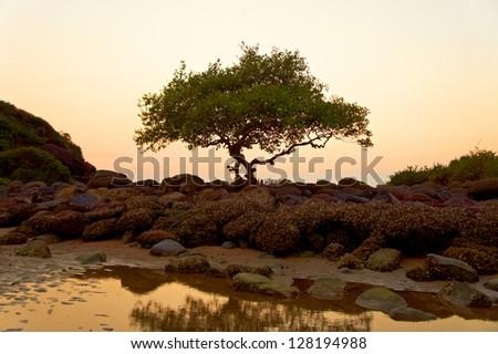Sunset on the Goa beach, India