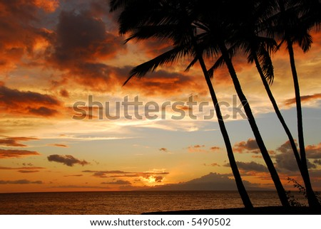 Sunset On The Island Of Maui With Palm Trees Silhouetted Against the Sky - stock photo