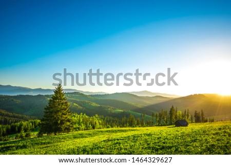 Sunset on the meadow in the village Yablunitsa, Carpathians. #1464329627