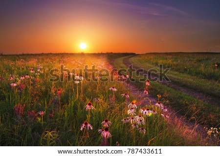 Sunset on the Wah'Kon-Tah Prairie in Missouri with various types of coneflowers and other wildflowers glowing in the sunlight.