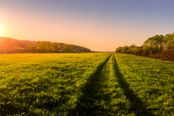 Sunset or dawn in a spring field with green grass, a path with tire marks, willows and a clear sky. The sun leaving deep shadows.