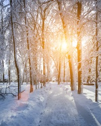 Sunset or sunrise in a winter park with trees, benches and a pavement covered with snow and sunbeams shining through the branches.