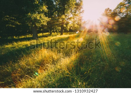 Sunset Or Sunrise In Forest Landscape. Sun Sunshine With Natural Sunlight And Sun Rays Through Woods Trees In Summer Forest. Beautiful Scenic View. Natural Real Lens Flare Effect