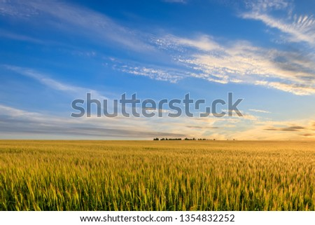 Sunset or sunrise on the field with young rye or wheat in the summer with a cloudy sky background. Landscape. #1354832252