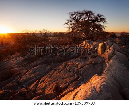 Sunset over a boabab tree at kubu island