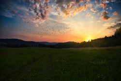 Sunset over a large meadow. The sun sets behind the trees in the forest. A flock of birds flies in the sky, colorful clouds from the setting sun, the sun's rays.