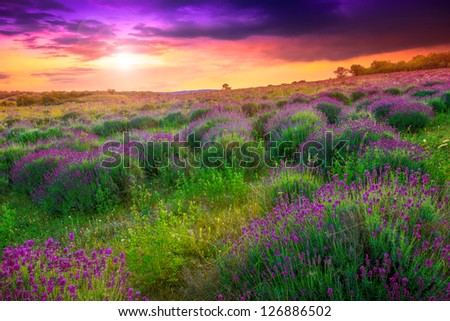 Sunset over a summer lavender field in Tihany, Hungary- This photo make hrd technik