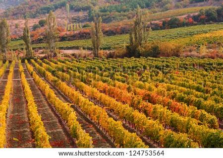 Sunset over a vineyard in the fall season Crimea Ukraine