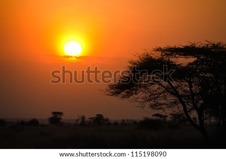 Sunset over African Savannah with tree in foreground. Beautiful scene from Serengeti National Park