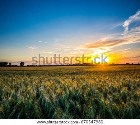 Sunset over Agricultural Cereal field in Suffolk England #670547980